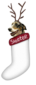 Skeeter in a stocking